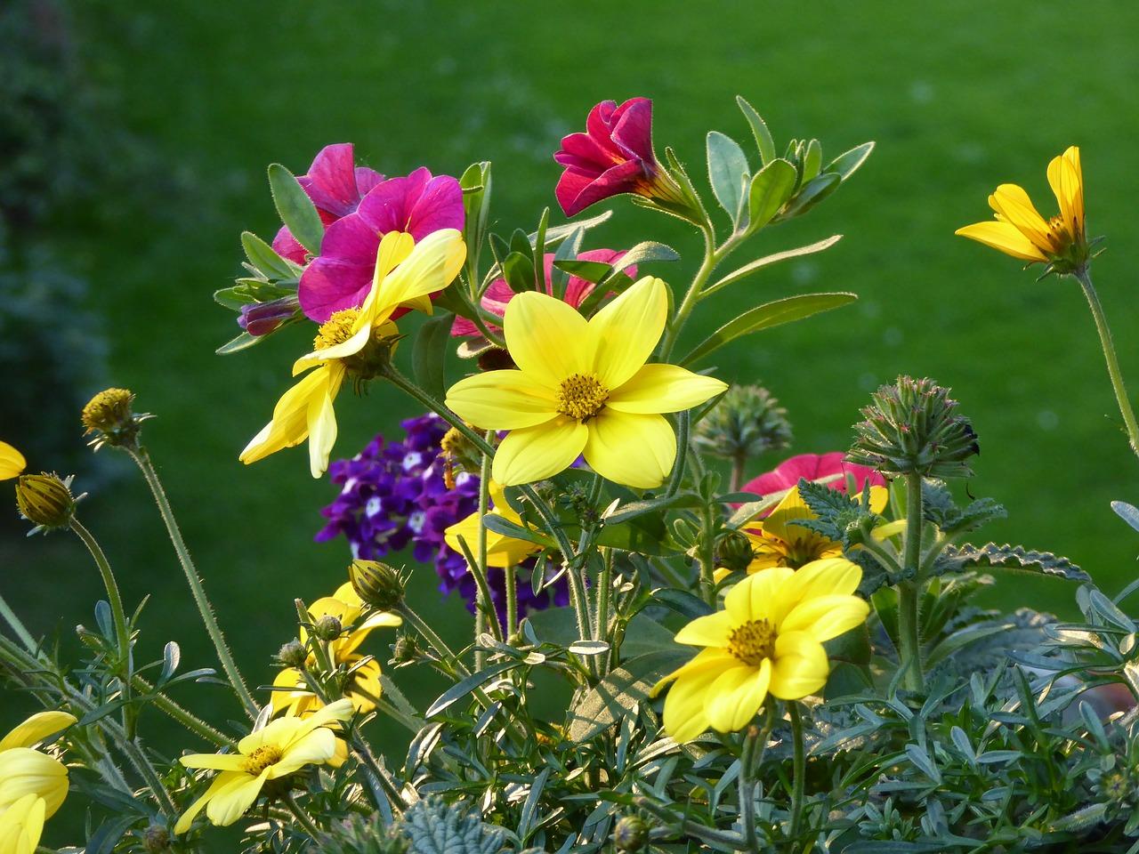 Bildausschnitt bunter bienenfreundlicher Balkonblumen